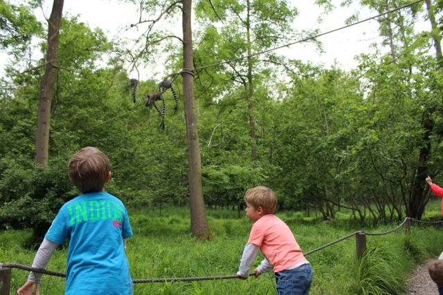 - Der er mulighed for at gå ture inde hos lemurerne, hvilket passede perfekt med at vi trængte til at strække benene et øjeblik:-) -