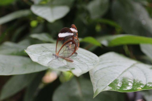 sommerfugl, koebenhavn-zoo