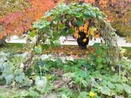 Jardin des Plantes potager