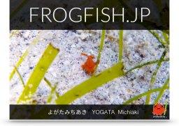 FROGFISH.JPの表紙イメージ