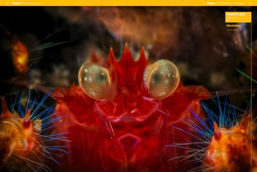 Oliver's squat lobster - quotation  from Syon Publishing Ltd.