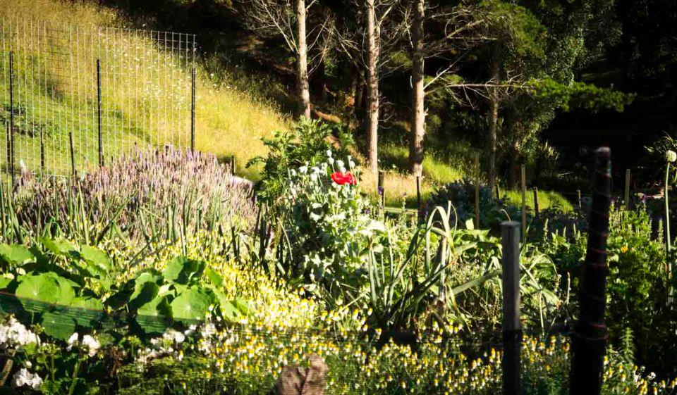 Garden madness ...