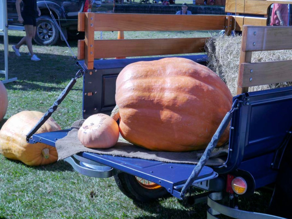 Now this is what you call a 'pumpkin'