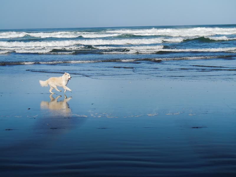 dan walking beach-1050422