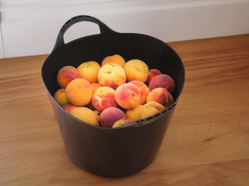 Peaches-1050397