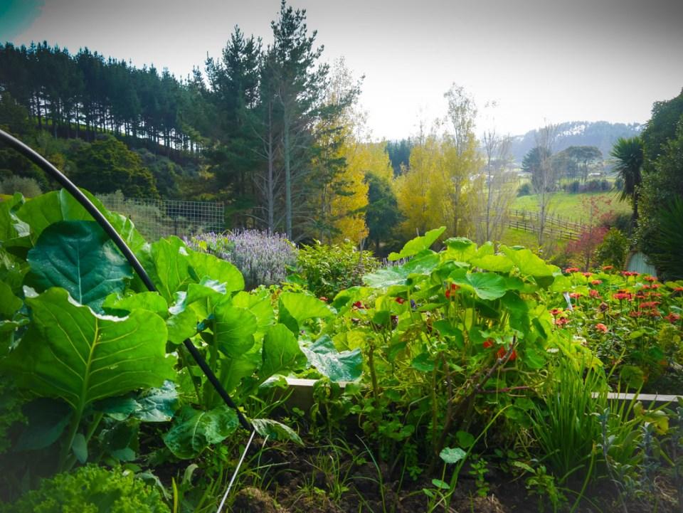garden magic-1060902