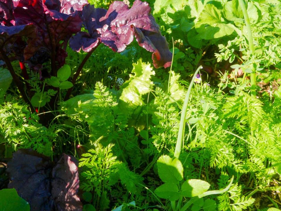 salad bed-1070018