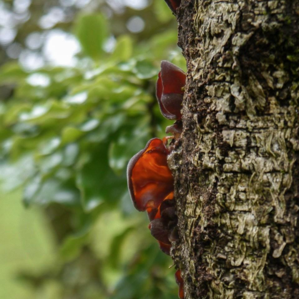 tree-fungus-1080403