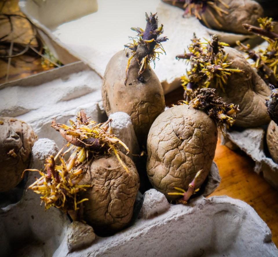 potatoes-1080797