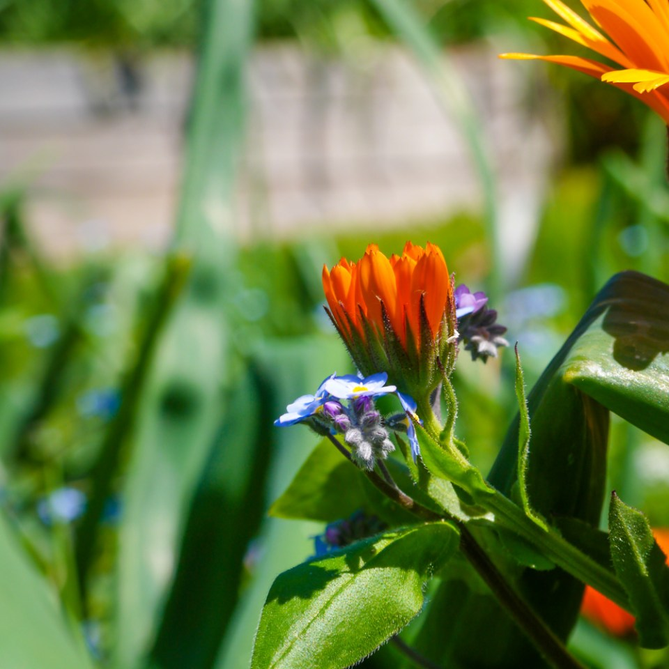 spring flowers-1080844