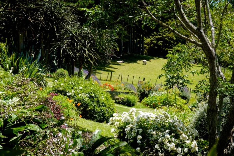 veg garden-1090694