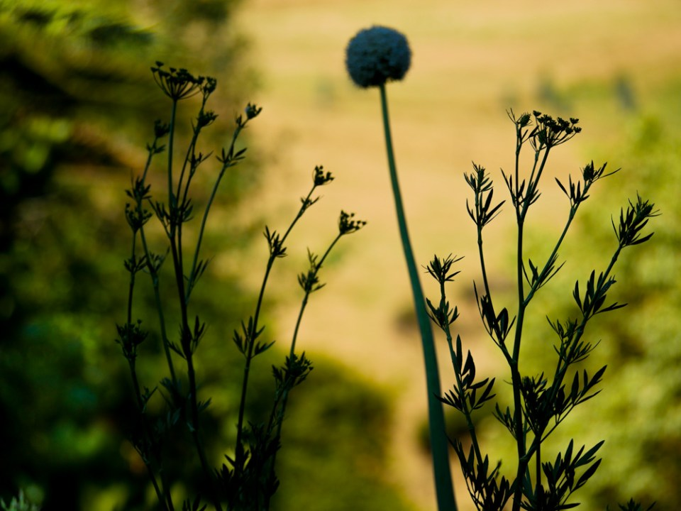 seeds-1110209