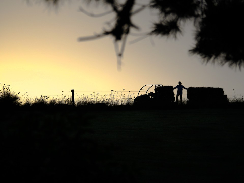 sunset-hay-day-1110069