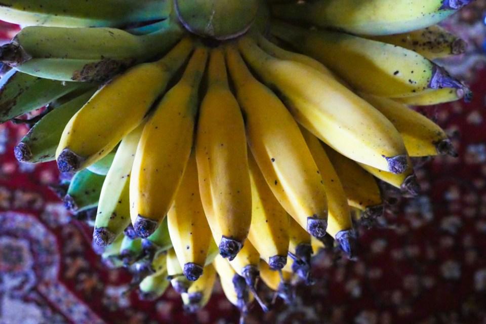 bananas-1140017