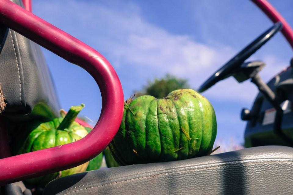 self-seeded-pumpkin-1140980
