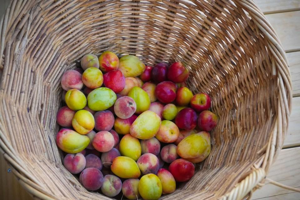 fruit basket-1220629