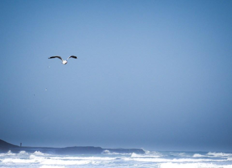 seagull-1210844