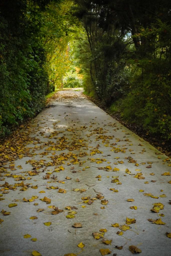 autumn leaves-1250028