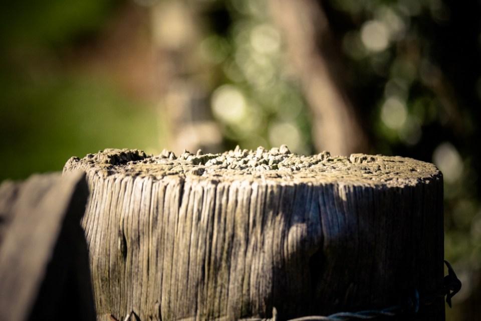 wooden post-1260275
