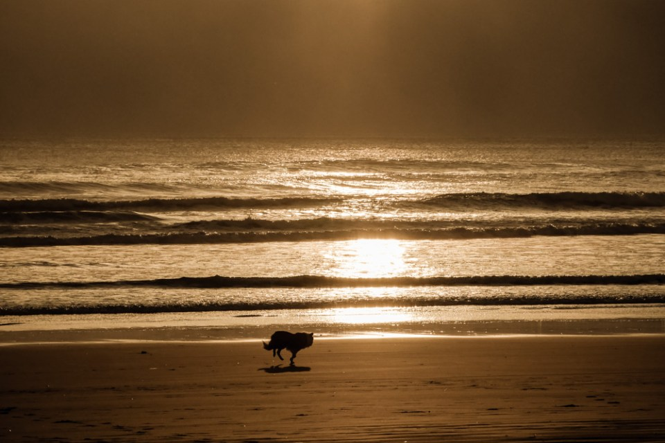 muriwai_beach-1270567