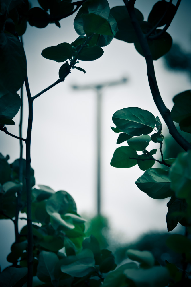 quince-tree-view-1280120