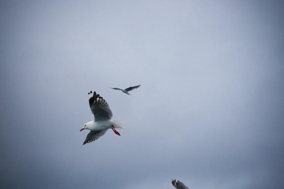 seagulls-1280764