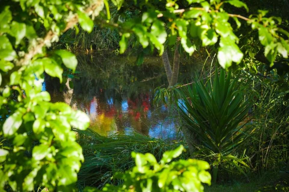 canna-reflections-1290315