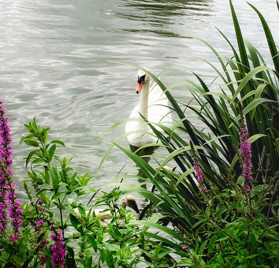 Thames Whitney