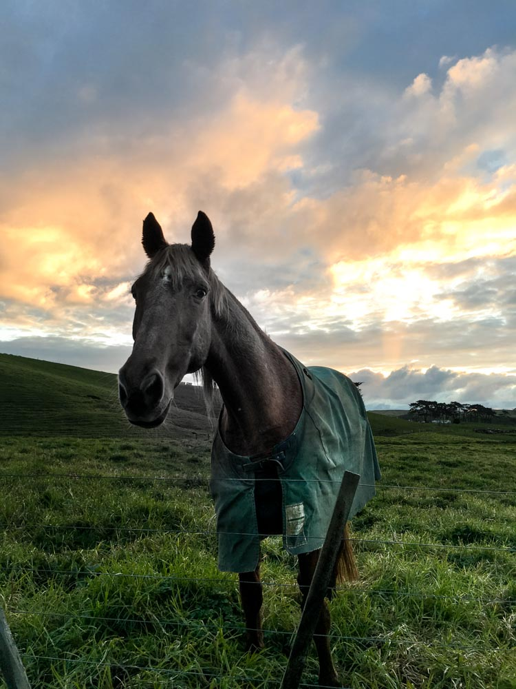 chestnut horse and sunset