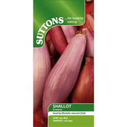Shallot Simione Pink-0