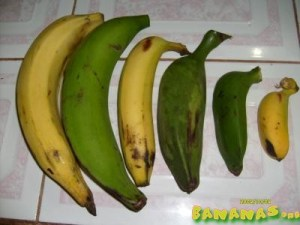 ,,Рlátano ,, бананы для жарки - они самые крупные и не сьедобные сырые - !