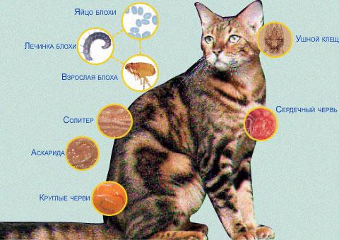 какими  можно заразиться от кошек ...