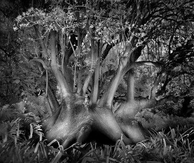 Brain-Tree,medium_large.1376195786