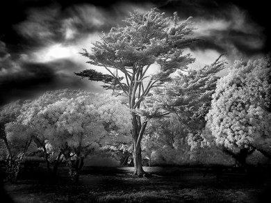 Wind-Swept-Tree,medium_large.1376195789