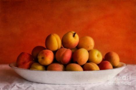 1-apricot-delight-priska-wettstein