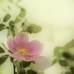 where-the-wild-roses-grow-priska-wettstein