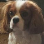 Dash, The Wonder Dog