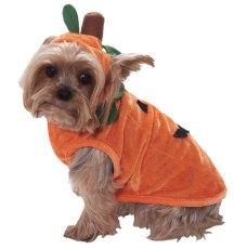 pumpkin-dog