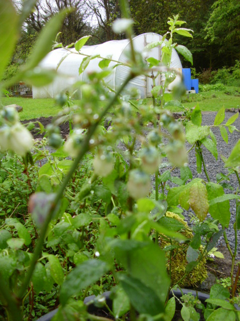The May garden. (5/6)