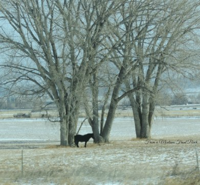Pony ~ From a Montana Front Porch