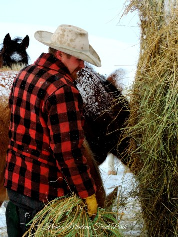 Cowman ~ From a Montana Front Porch