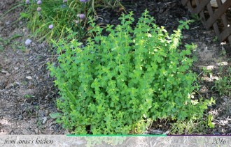 Oregano - From Anna's Kitchen (www.fromannaskitchen.com)