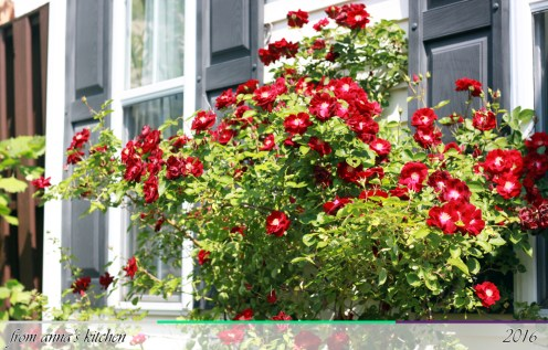 Climbing Rose Trellis - From Anna's Kitchen (www.fromannaskitchen.com)