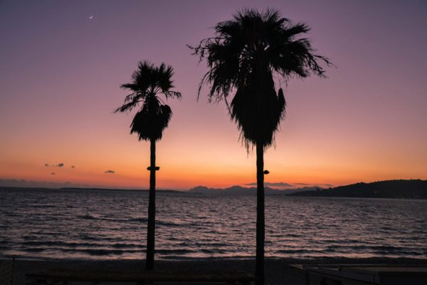 Palmiers-Antibes-Juan-les-pins-e1488375629287-600x400