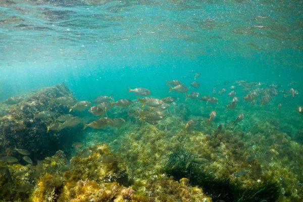 daurade-snorkeling-cap-dantibes
