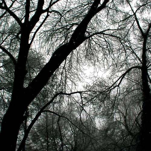 arbres-neige-nice-sophia-fevrier-2018