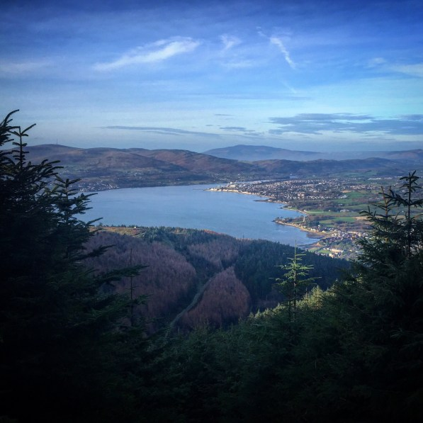 Overlooking Warrentpoint and Carlingford Lough between the pine trees