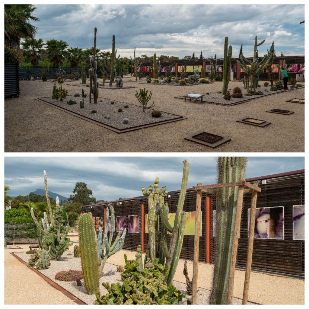 Visite des jardins du parc Galea, une impressionnante collection de cactus