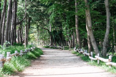 Less visited area of nami island.