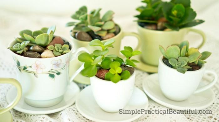 tea-cup-planters